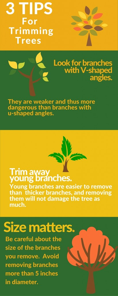 Tree Trimming Tips and Tree Care