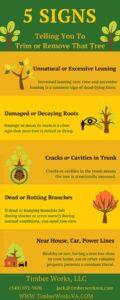 Virginia Tree Removal Tips