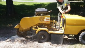 Stump Removal Service VA
