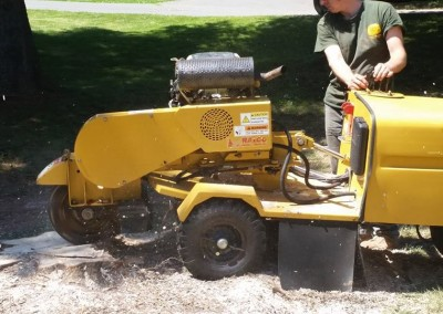 Stump Grinding Front Royal, VA