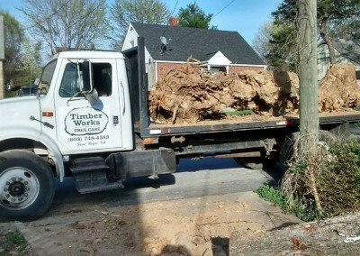 Stump Removal Service Front Royal, VA