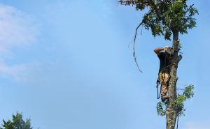 Timber Works Tree Care: Virginia Tree Service and Tree Removal