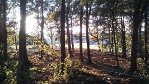 Tree Service and Tree Removal Company Virginia
