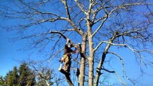 Front Royal Tree Service Company