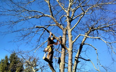How To Check Your Trees After Winter Storms