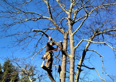 Tree Removal Company, Owner