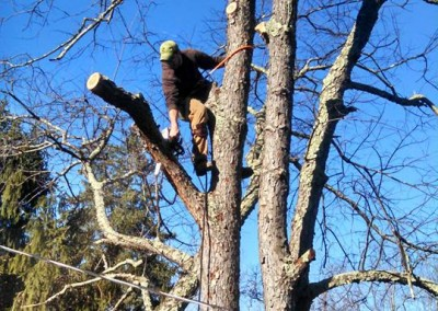 Tree Removal Crew Leader