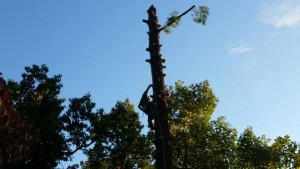 Tree Removal Service Virginia