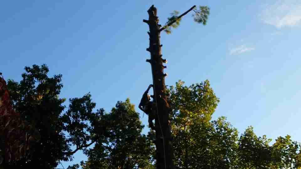Tree Service Front Royal VA