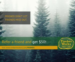 Timber Works Tree Service Referral