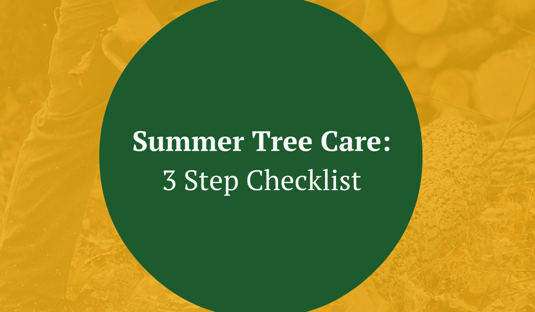 Summer Tree Care: 3 Step Checklist