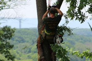 Tree Trimming and Pruning in Warrenton, VA