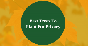 Best Trees To Plant Privacy