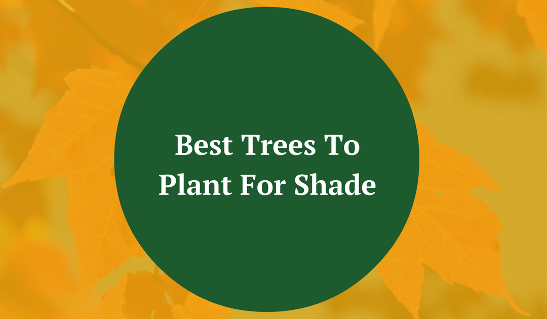Best Trees To Plant For Shade