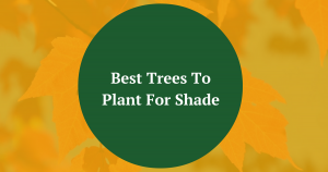 Best Trees To Plant Shade