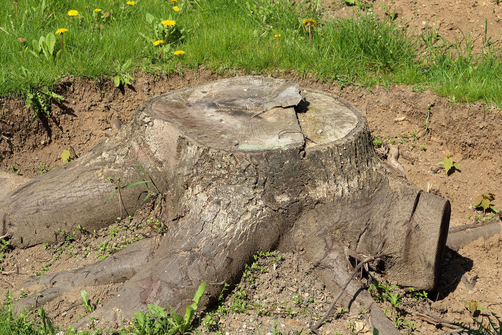 how to remove a large tree stump