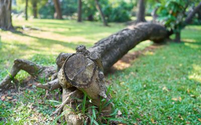 5 Warning Signs Your Tree Needs to be Removed