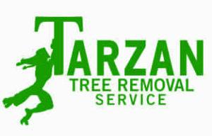 Tree Service Expert Advice