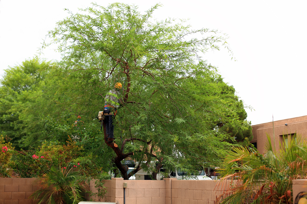 what is tree crown reduction