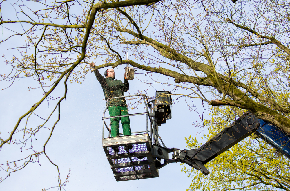What is Tree Crown Reduction? The Secret to Keeping Your Trees Healthy, Fit, and Green