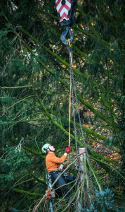 danger in tree removal