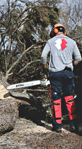 tree removal chain saw