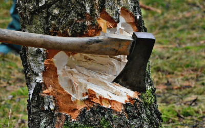 What is the Tree Removal Cost Per Tree?