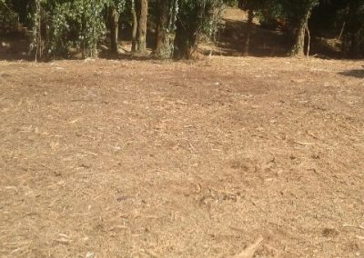 Land Clearing (4)