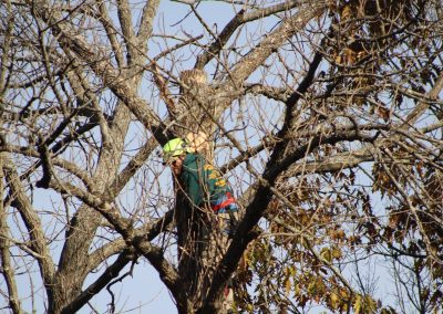 Tree Removal (1)