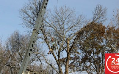 Impact of COVID-19 on the Tree Care Industry