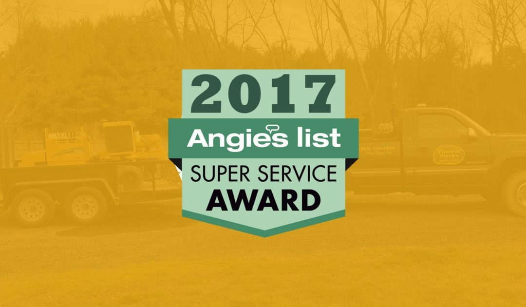 Timber Works Tree Care Wins Angie's List Super Service Award