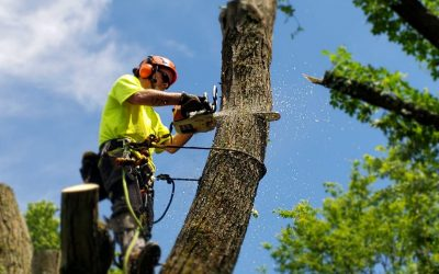 4 Different Types of Tree Removal
