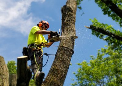 tree removal in Delaplane VA