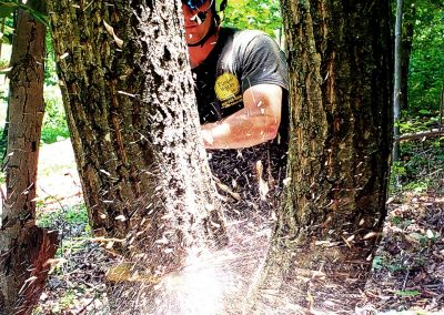 Insured Tree Service Nokesville VA