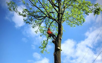 Why Workers' Comp is Important When Hiring a Tree Service