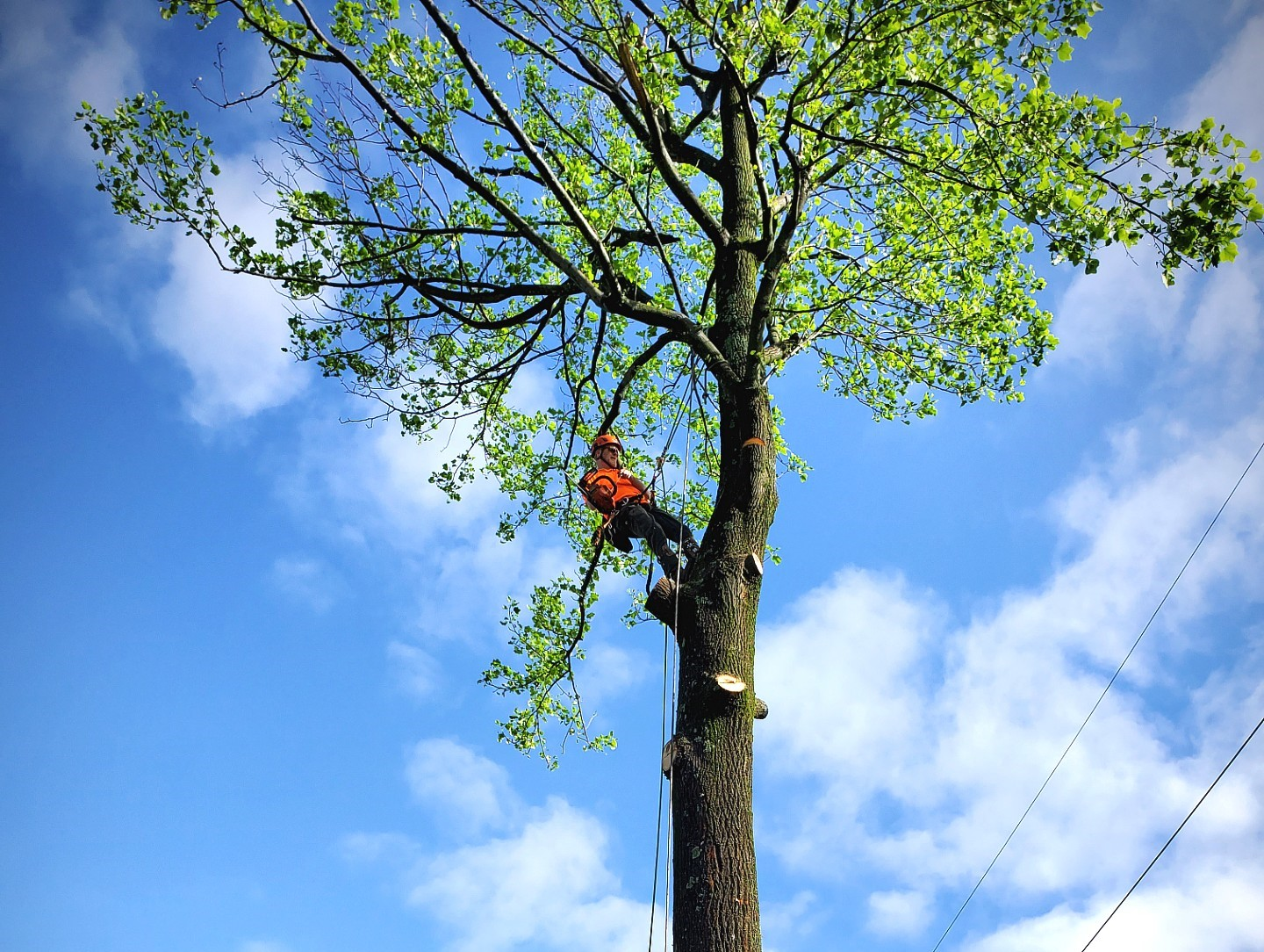 Winchester Tree Service Experts