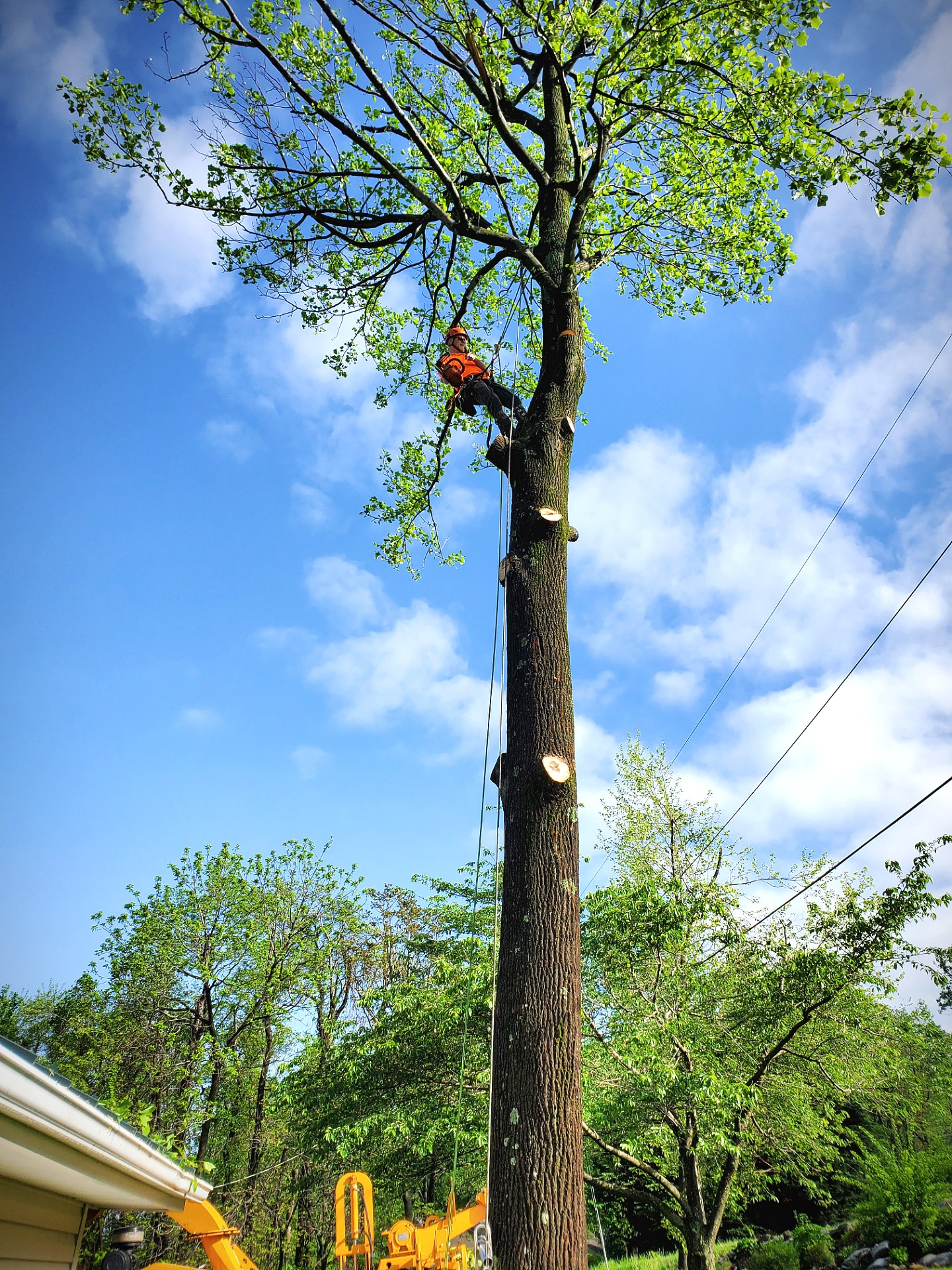 Warrenton Tree Service Company