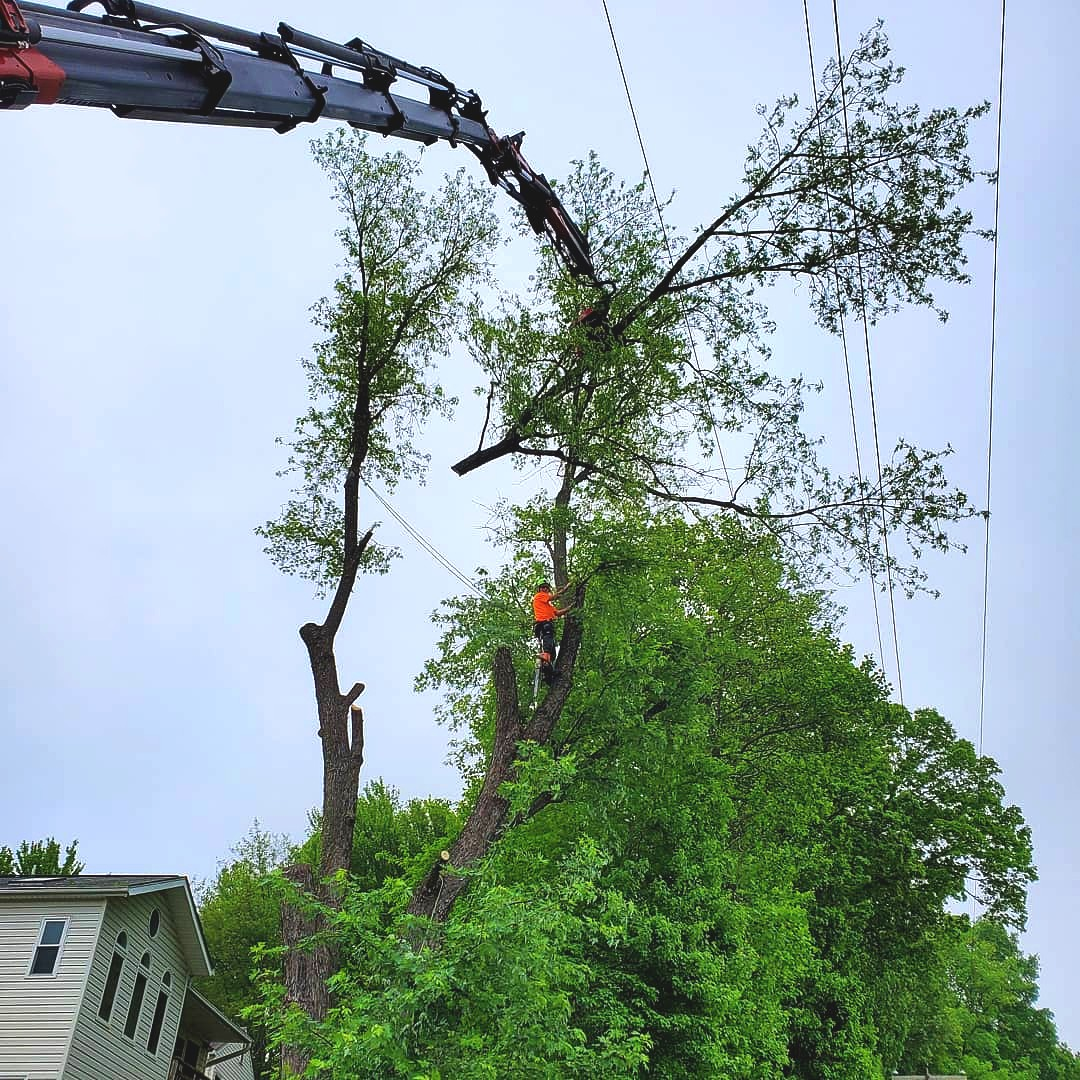 Warrenton Tree Service Experts
