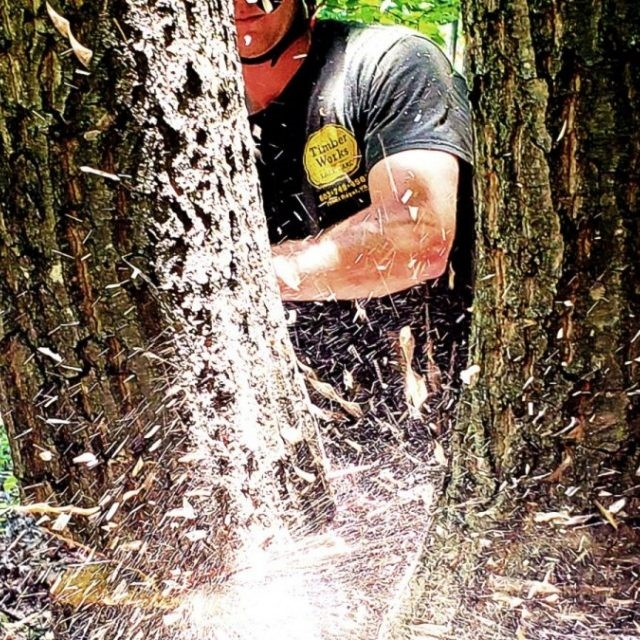 Tree Services and Tree Removal Virginia