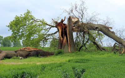 How To Manage Storm-Damaged Trees