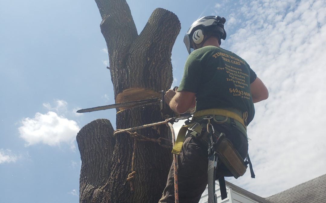 Why Work With A Tree Service that Prioritizes Their Team's Safety