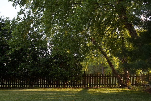 Backyard in need of a tree removal service in Winchester VA