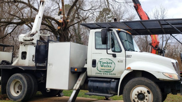 VA Tree Service and Tree Removal Company