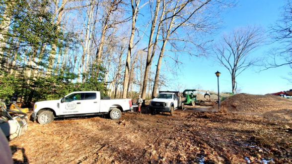 ISA Certified VA Tree Service and Tree Removal