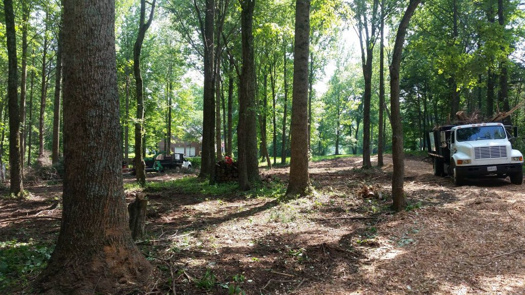 Land Clearing Marshall VA