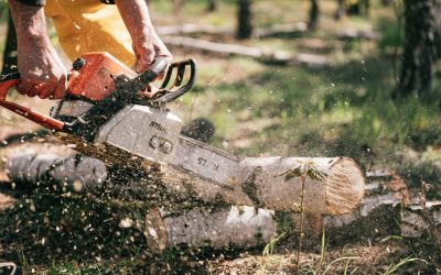 Multi-Tree Removal: Reasons and Benefits