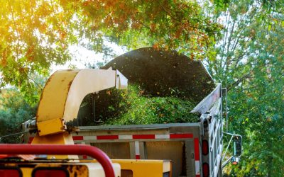 The Advantages of Mulching Wooded Properties