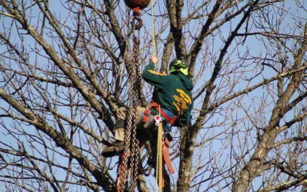 Strasburg VA Tree Trimming Professional