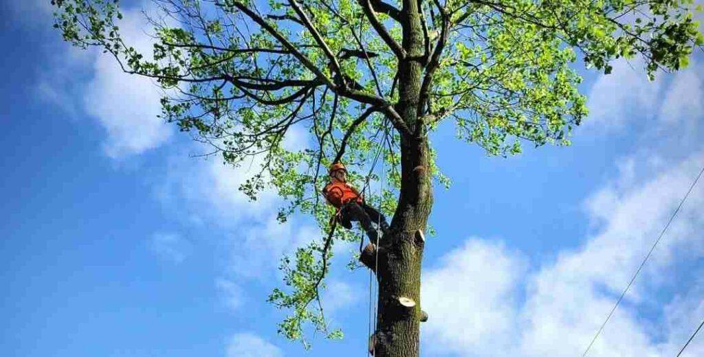 Tree Trimming job in Strasburg VA