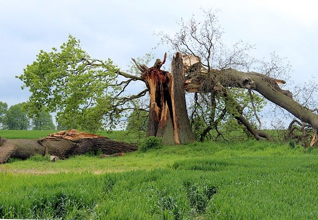 A broken tree after a storm in need of insured tree services